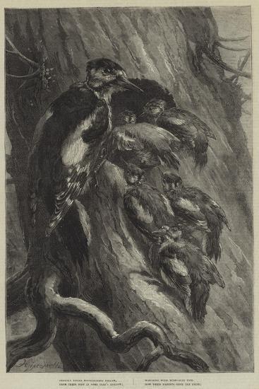 The Woodpecker--Giclee Print