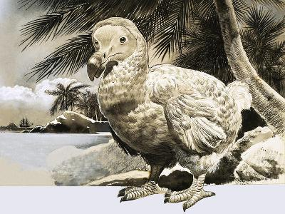 The World of Nature: The Mystery Bird from Mauritius--Giclee Print