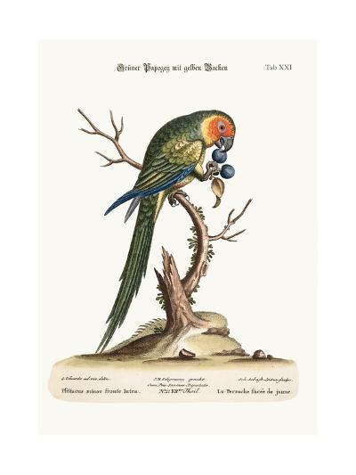 The Yellow-Faced Parrakeet, 1749-73-George Edwards-Giclee Print