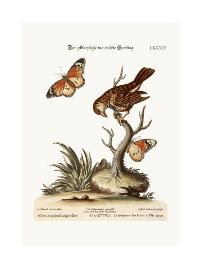 The Yellow-Headed Indian Sparrow, 1749-73-George Edwards-Giclee Print
