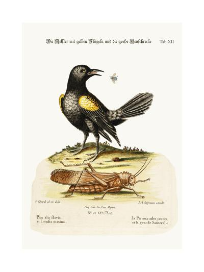 The Yellow-Winged Pye, and Greatest Locust, 1749-73-George Edwards-Giclee Print