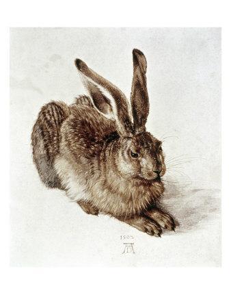 https://imgc.artprintimages.com/img/print/the-young-hare_u-l-oafpp0.jpg?p=0