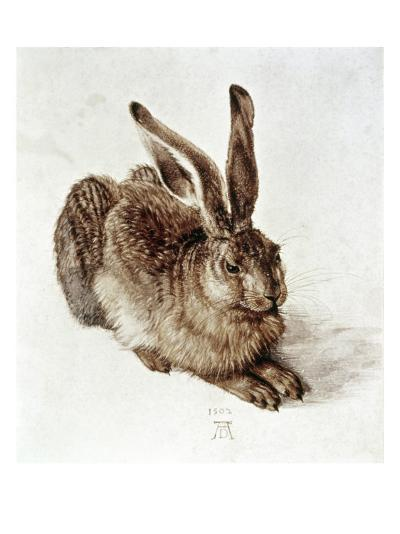 The Young Hare-Albrecht D?rer-Giclee Print