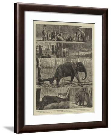 The Young Princes on their Cruise, Notes at an Elephant Kraal Near Awisawella, Ceylon--Framed Giclee Print