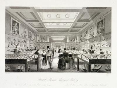 The Zoological Gallery, British Museum, Holborn, London, C1850-William Radclyffe-Giclee Print