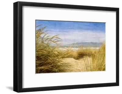 Dune Grass 4