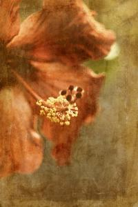 Hibiscus 1 by Thea Schrack