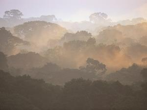 Morning Fog and Tropical Rainforest Canopy in Ecuador by Theo Allofs
