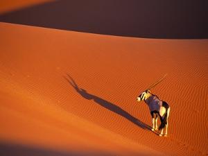 Oryx Antelope on Sossusvlei Sand Dune by Theo Allofs