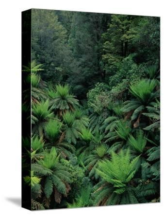 Rain Forest Ferns and Trees