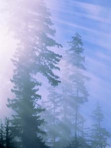 USA, California, Redwood National Park, forest and sun rays by Theo Allofs