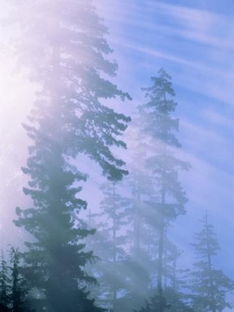 USA, California, Redwood National Park, forest and sun rays