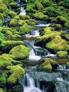 USA, Washington, Olympic National Park, creek with moss and rocks by Theo Allofs