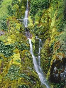 Waterfall on Moss-Covered Cliff by Theo Allofs