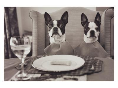 Boston Terriers Dining