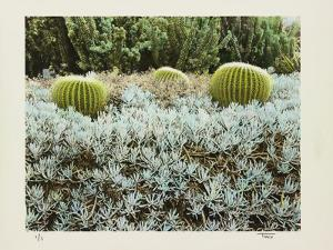 California Cactus Garden 1975 by Theo Westenberger