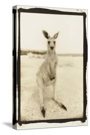 Cute Roo, Australia