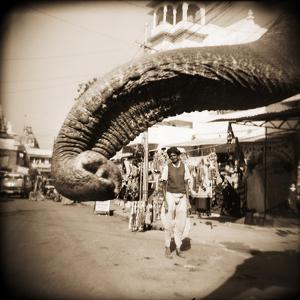 Elephant Trunk at Indian Bazaar by Theo Westenberger