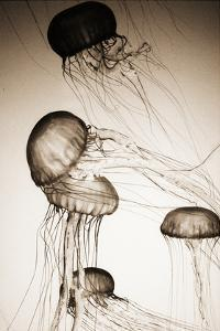 Jellyfish in Motion 2 by Theo Westenberger