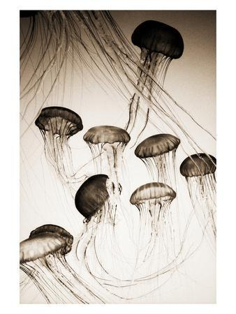 Jellyfish in Motion 3