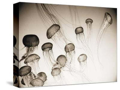 Jellyfish in Motion 4