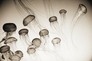 Jellyfish in Motion 4 by Theo Westenberger