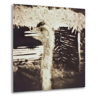Ostrich in Profile
