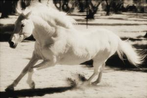 Running Horse by Theo Westenberger