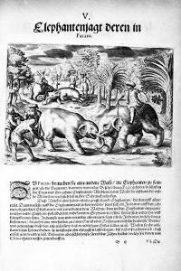 Elephants Fighting, 1606 by Theodore de Bry