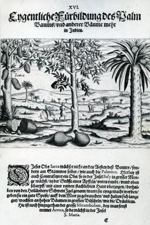 Landscape from 'India Orientalis', 1598