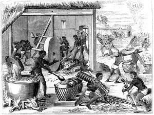 Sugar Production, 1873 by Theodore de Bry