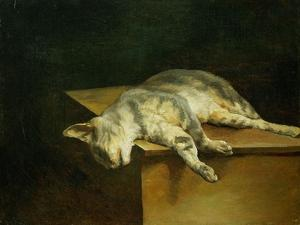 Dead cat. Oil on canvas,50 x 61 cm. by THEODORE GERICAULT