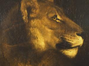 Head of a Lioness by Théodore Géricault
