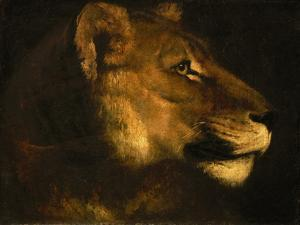 Tete de lionne. Head of a lioness by Theodore Gericault