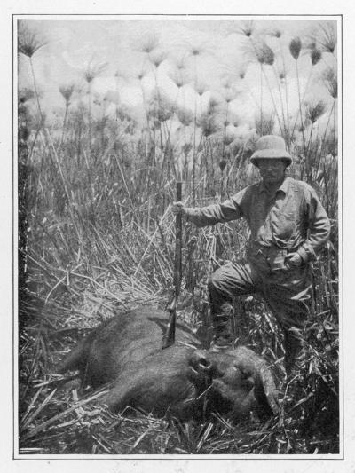 Theodore Roosevelt 26th American President with a Dead Buffalo--Photographic Print