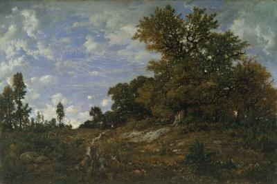 The Edge of the Woods at Monts-Girard, Fontainebleau Forest, 1852-54