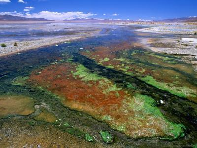 Thermal Hot Springs' Run-Off on Altiplano, Lake Verde, Bolivia-Brent Winebrenner-Photographic Print