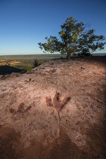 Theropod tracks cross Flag Point near Kanab.-Cory Richards-Photographic Print