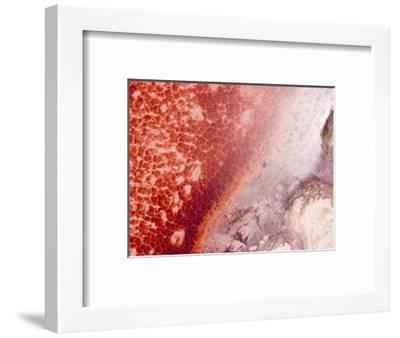These Pink Crusts Are Byproducts from Microrbes Found in Lake Natron, Tanzania-Michael Fay-Framed Photographic Print