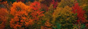 These Shows the Autumn Colors on the Foliage of the Trees