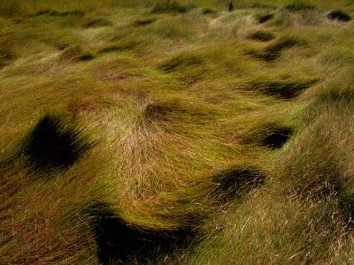 Thick Grasses Blow in the Wind-Todd Gipstein-Photographic Print