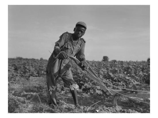 Thirteen-Year Old African American Sharecropper Boy Plowing in July 1937-Dorothea Lange-Photo