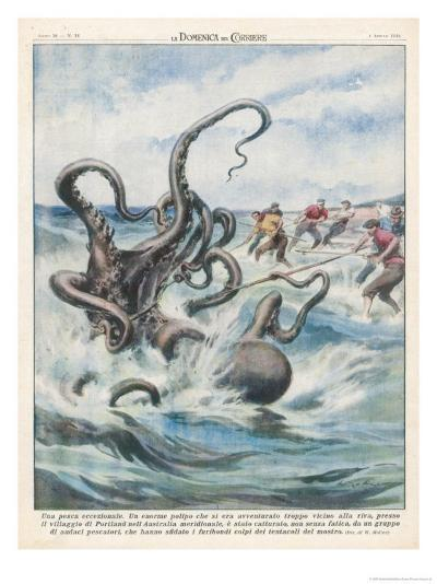 This Giant Polyp was Captured by Fishermen of Portland South Australia-Walter Molini-Giclee Print