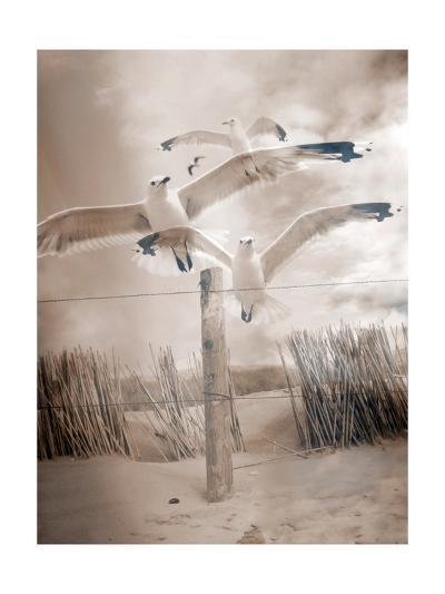This Way-Alaya Gadeh-Art Print