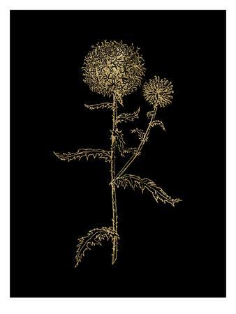 https://imgc.artprintimages.com/img/print/thistle-2-golden-black_u-l-f8c0vd0.jpg?p=0