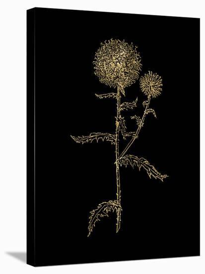 Thistle 2 Golden Black-Amy Brinkman-Stretched Canvas Print
