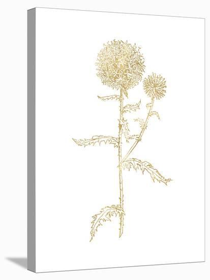 Thistle 2 Golden White-Amy Brinkman-Stretched Canvas Print