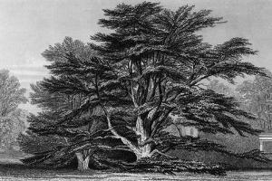 Peper Harow Park, Surrey by Thomas Allom