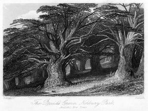 The Druid's Grove, Norbury Park, Surrey, 19th Century by Thomas Allom
