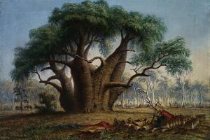 Gouty Stem Tree by Thomas Baines